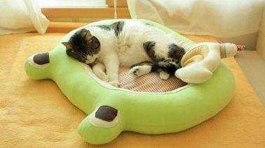 วิธีทำที่นอนแมว เบาะนอนแมว DIY ที่นอนแมว น่ารัก ๆ