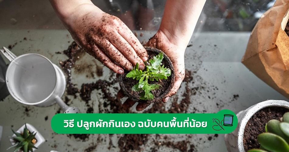 วิธี ปลูกผักกินเอง 2021